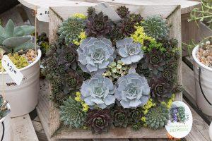 cactus garden plants