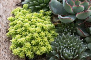 cactus plantings