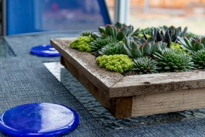 decorative planting display